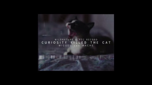 PROMO Curiosity killed the cat